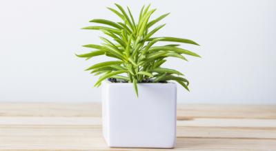 growth-plant-2
